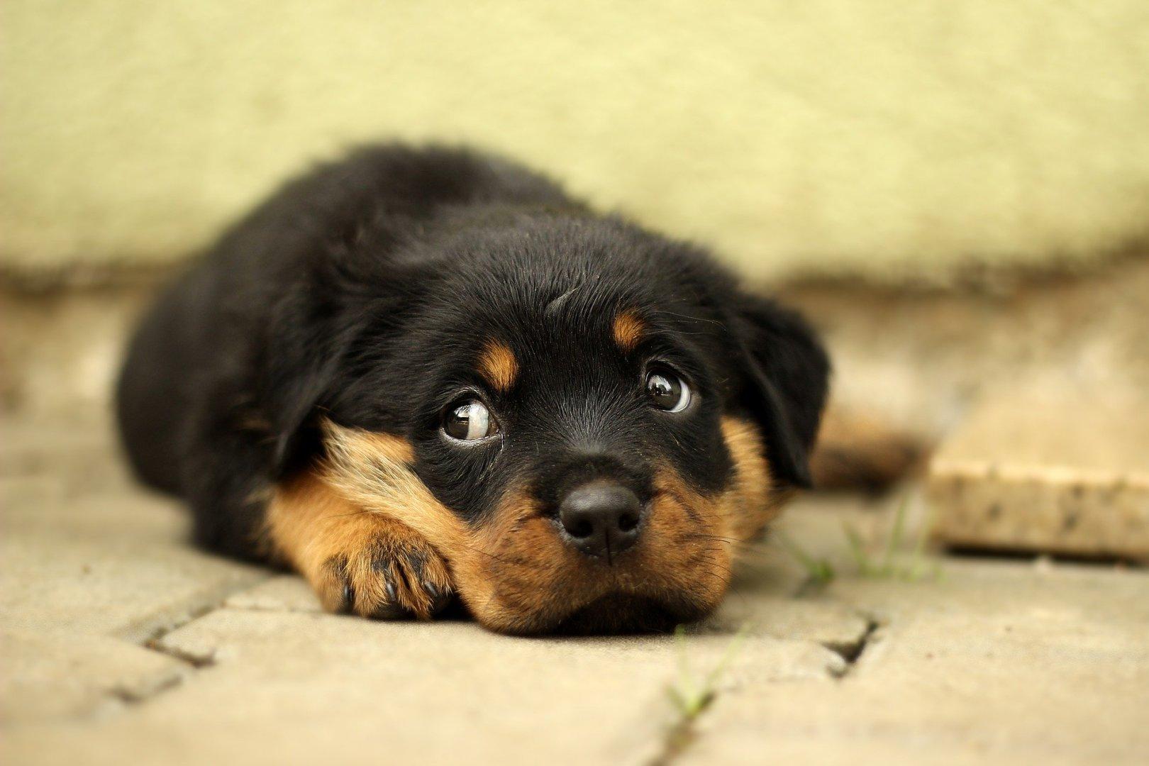「犬」のアイキャッチ画像