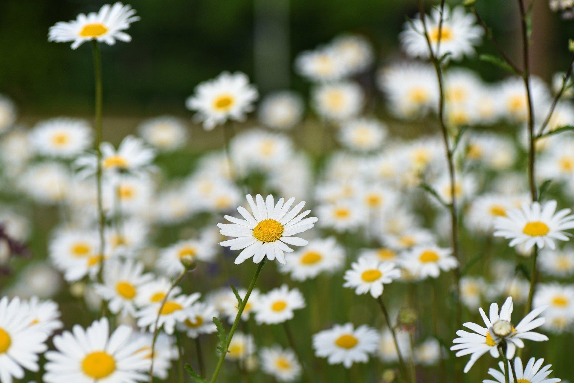 アイキャッチ 花